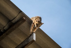 Funny Cat Pictures, Cat Playing on the roof