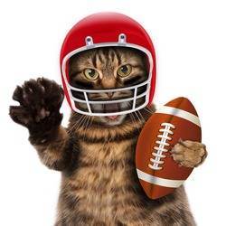 Funny cat playing American football.