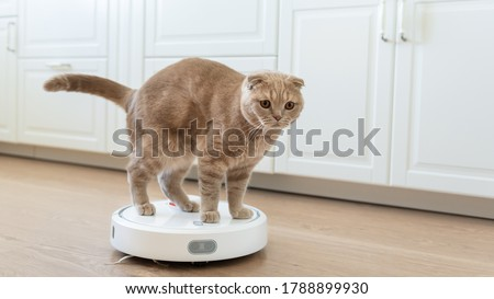 Funny cat playing with a robot vacuum cleaner. Pet friendly smart vacuum cleaner. Housekeeping help, new technology, smart home, daily vacuuming. Horizontal