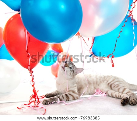 Funny cat playing with balloons.