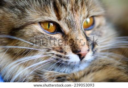 Funny cat portrait #239053093