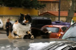 Funny cat pose on a top of a car