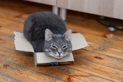 Funny cat sleeping in a cardboard box on a wooden floor