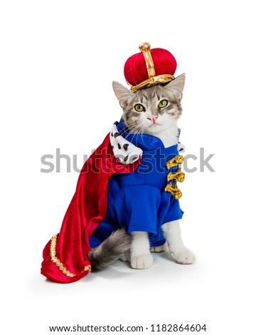 Funny cat wearing royal king Halloween costume isolated on a white background #1182864604