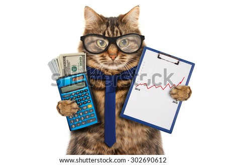 Funny cat with a folder for presentations. Money in hand. Business scene.