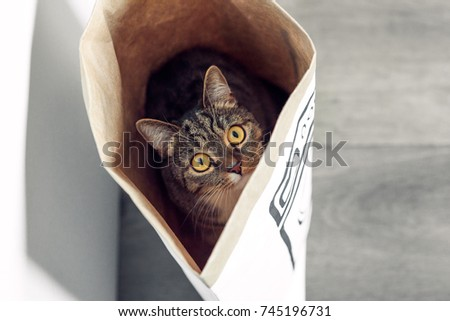 Funny cat with big yellow eyes sitting in a paper bag and looks out from it. Funny pets playing at home