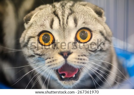 funny cat with blurred background