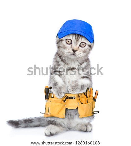 Funny cat worker with toolbelt.  Isolated on white background