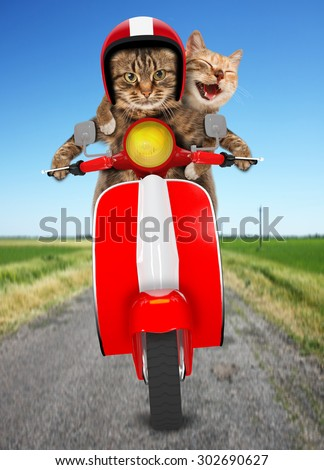Funny cats - driving a moped. Humorous theme. Two cat driving a moped.