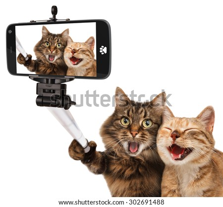 Funny cats - Self picture. Selfie stick in his hand. Couple of cat taking a selfie together with smartphone camera