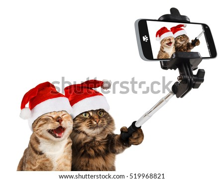 Funny cats - Selfie picture. Funny cats are taking a selfie with smartphone camera. Funny cats are celebrating Christmas. Funny cats are wearing Christmas hats. Selfie party.