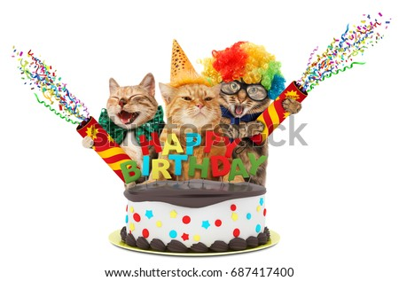 Funny cats with petard and birthday cake.  They are wearing festive clothes, isolated on white background.