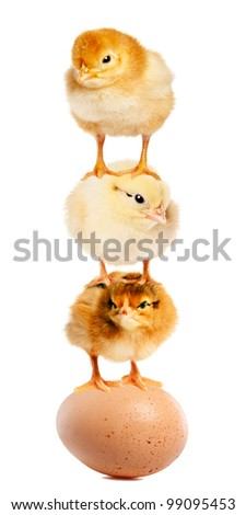 Funny chickens created a pyramid of gymnasts. Isolation.