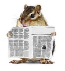 Funny chipmunk read newspaper, news concept
