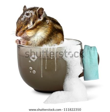 Funny chipmunk taking a bath, bathroom concept