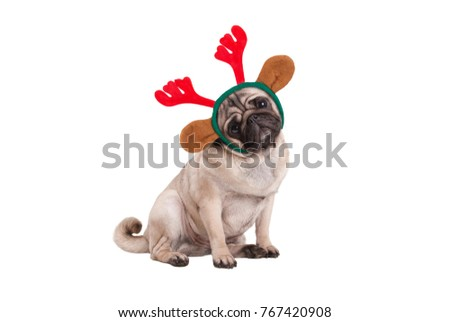 funny Christmas pug puppy dog sitting down, wearing reindeer antlers diadem, isolated on white background