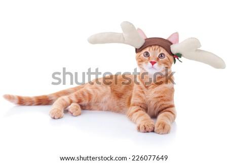 Stock Photo Funny Christmas Rudolph reindeer pet cat