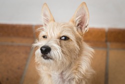 Funny closeup dog face. Dog with a suspicious face. Hairy dog. Mongrel dog. Funny memes.