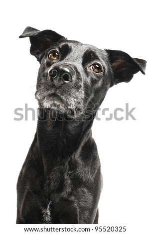 Funny closeup of a cute mutt waiting for a treat
