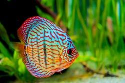 Funny colorful fish in aquarium