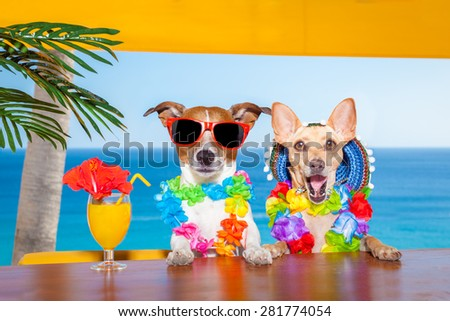 funny cool couple of  dogs drinking cocktails at the bar in a  beach club party with ocean view on summer vacation holidays #281774054