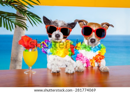funny cool couple of  dogs drinking cocktails at the bar in a  beach club party with ocean view on summer vacation holidays for honeymoon trip #281774069