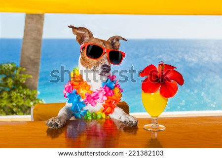 funny cool dog drinking cocktails at the bar in a  beach club party with ocean view #221382103