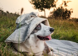 Funny corgi dog posing in a female hat against the backdrop of the setting sun, summertime