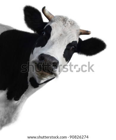 Funny cow isolated on a white background - stock photo
