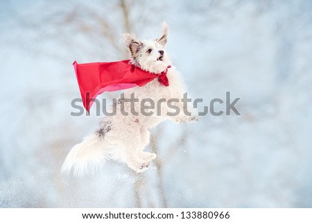 funny curly super hero dog wearing the red cloak flying in the sky