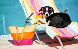 Funny cute female dog sunbathing on summer vacation wearing sunglasses. Pet relaxing on a hammock at swimming pool.