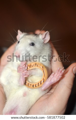 funny cute little white mouse sitting in the dryer legs #581877502