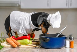 Funny dachshund dog in costume of chief with white cap is going to cook vegetarian dish with vegetables in kitchen, and looks into the pot to check situation.