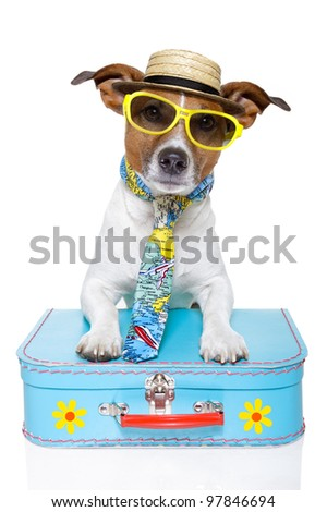 funny dog dressed up as a tourist with colorful bag , tie , sunglasses and a hat