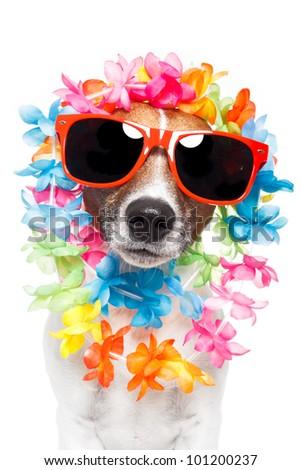funny dog  hawaiian  lei and sunglasses