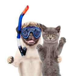 Funny dog in snorkeling mask hugs cat. Isolated on white background.