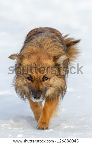 funny dog in sunny day, animals series
