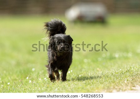 funny dog in sunny day, animals series #548268553