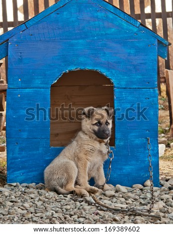 funny dog in the dog house