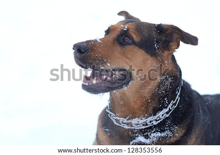 Funny dog in the snow