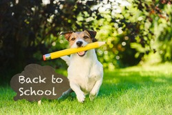 Funny dog next to sign welcoming back to school