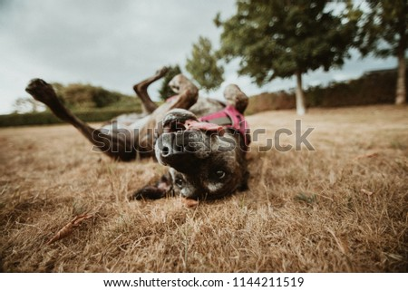 Funny dog on grass #1144211519