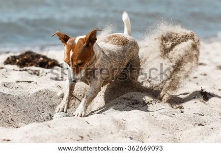 Funny dog on the beach