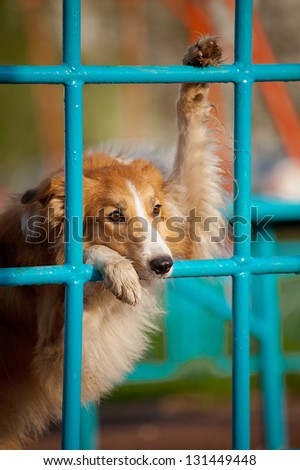 funny dog playing in the playground in summer, portrait