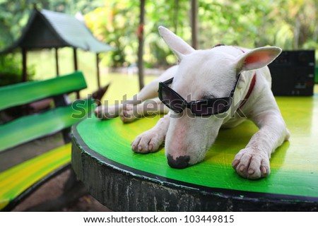 funny dog relaxing in park.