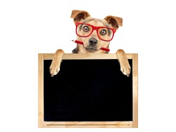 Funny dog wearing red glasses and holding pencil behind blank blackboard isolated