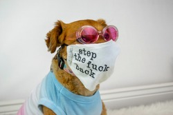 Funny dog wearing sunglasses and face mask with message