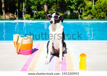 Funny dog wearing sunglasses on summer vacation at swimming pool