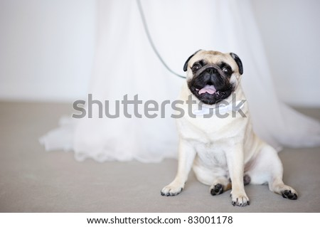 Funny dog with a bow at wedding - stock photo