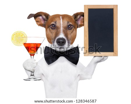 funny dog with a cocktail holding a   blank blackboard